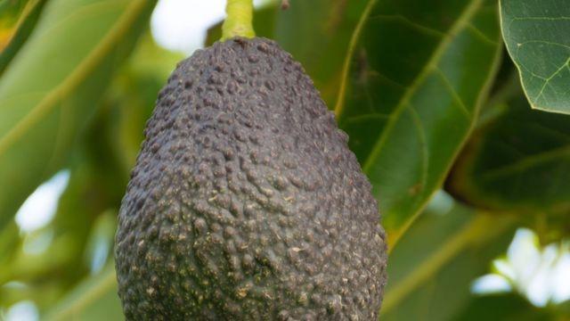 Comment on peut identifier un produit issu de l'agriculture biologique française ?