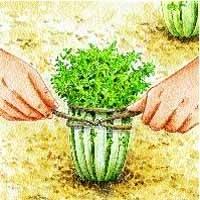 Comment protéger ses salades du froid ?