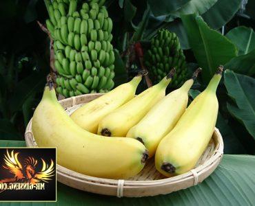 Est-ce que la banane est bonne pour les intestins ?