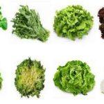 Est-ce que le concombre est un légume vert ?