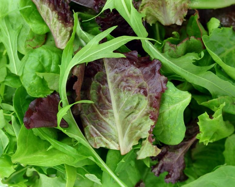 Est-ce que la salade est un légume vert ?