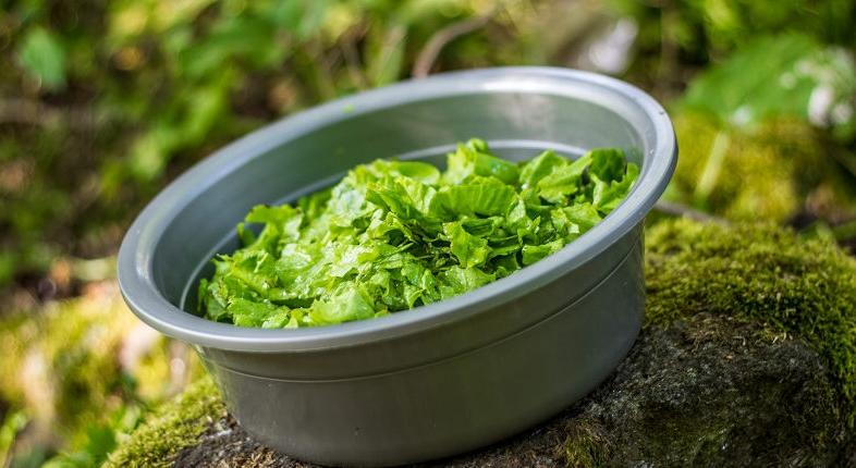 Pourquoi la salade est bonne pour la santé ?