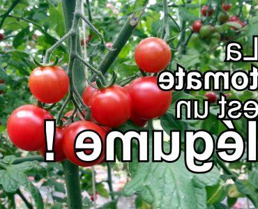 Pourquoi la tomate est un fruit et non un légume ?