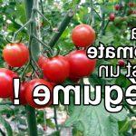 Quels légumes sont des fruits ?