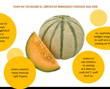 Pourquoi le melon est un légume ?