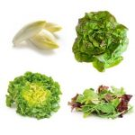 Quelle salade planter pour l'été ?