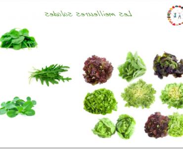 Quelle est la meilleure salade pour la santé ?