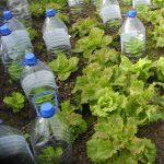 Quelle salade planter en septembre ?