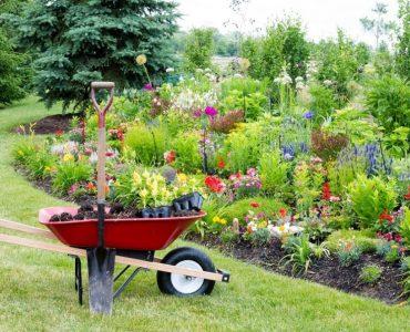 Quelle salade planter au mois d'août ?
