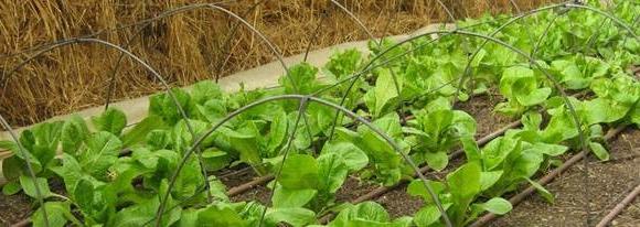 Quels sont les légumes à planter en septembre ?