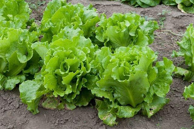 Qu'est-ce qu'on peut planter au mois de mai ?